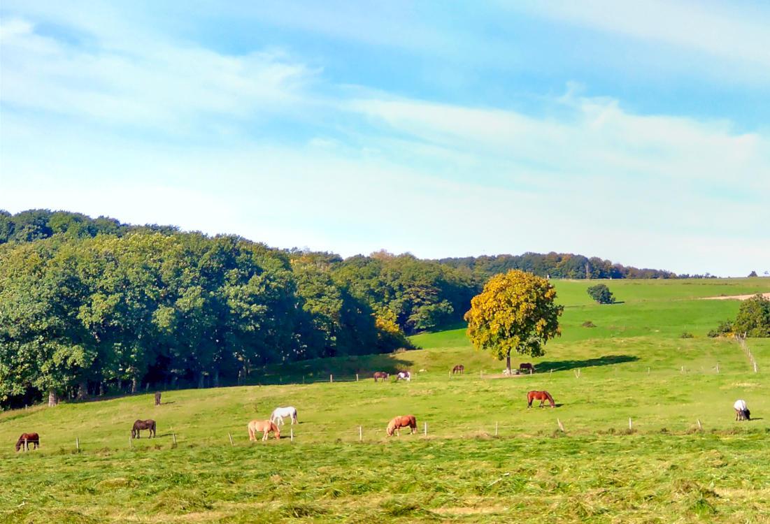 Pferde auf Bergwiese im Herbstlicht.
